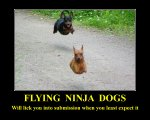 flying_dogs.jpg